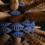 ceramics – 1223